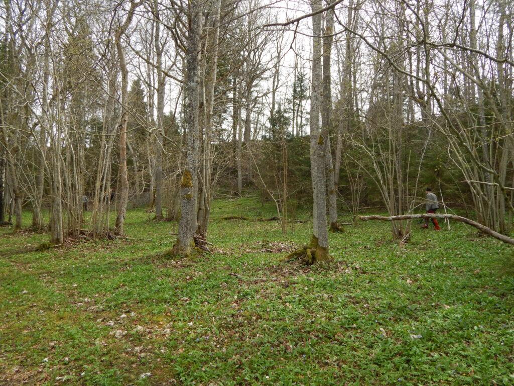 6.-9. sajandil ohverdati siia ehteid, relvi ja küllap ka inimesi. Viidumäe ohverduskoht Lääne-Saaremaal.