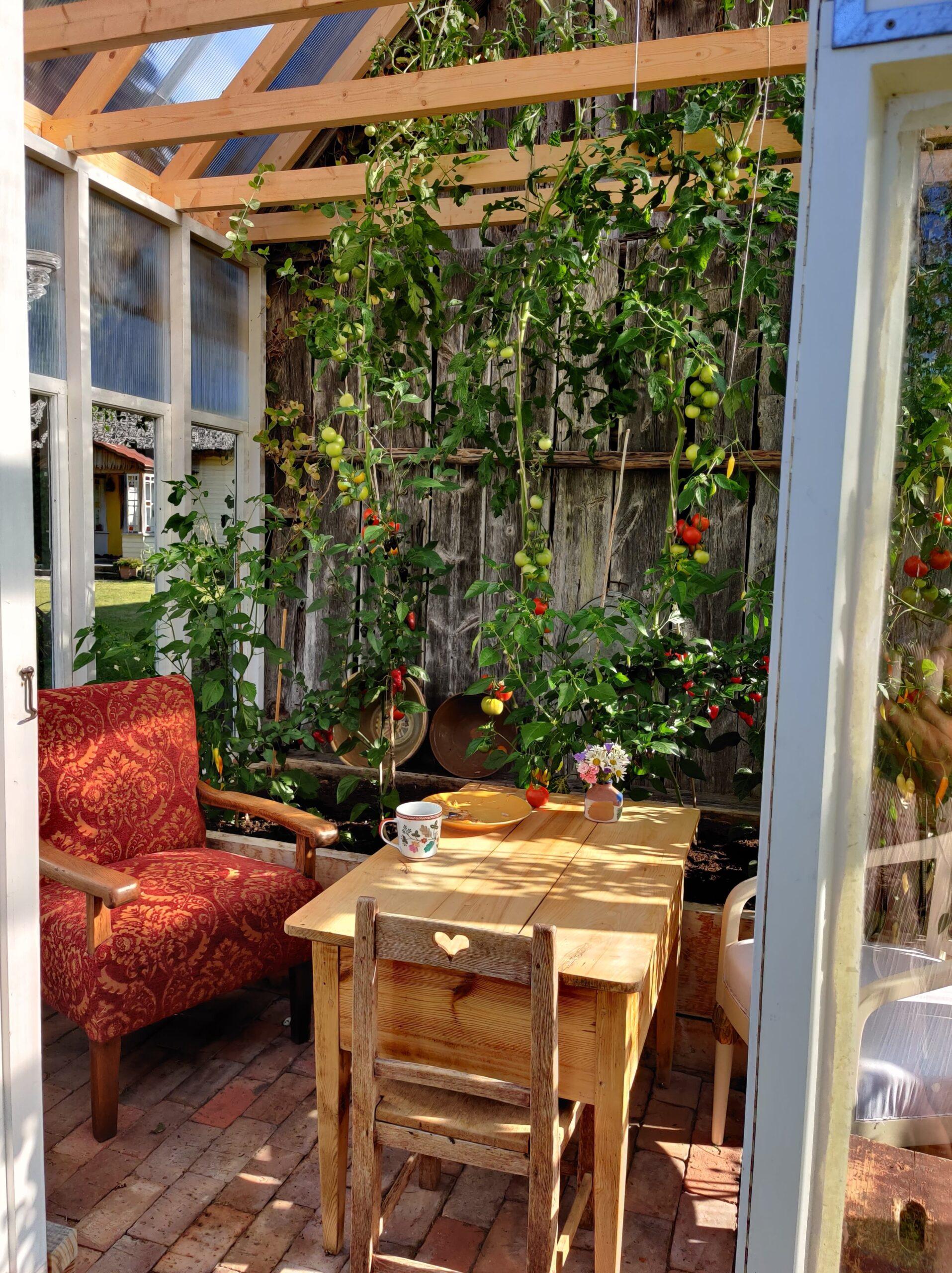 Isegi kasvumajas on kasutuses väärtuslik restaureeritud vanamööbel.
