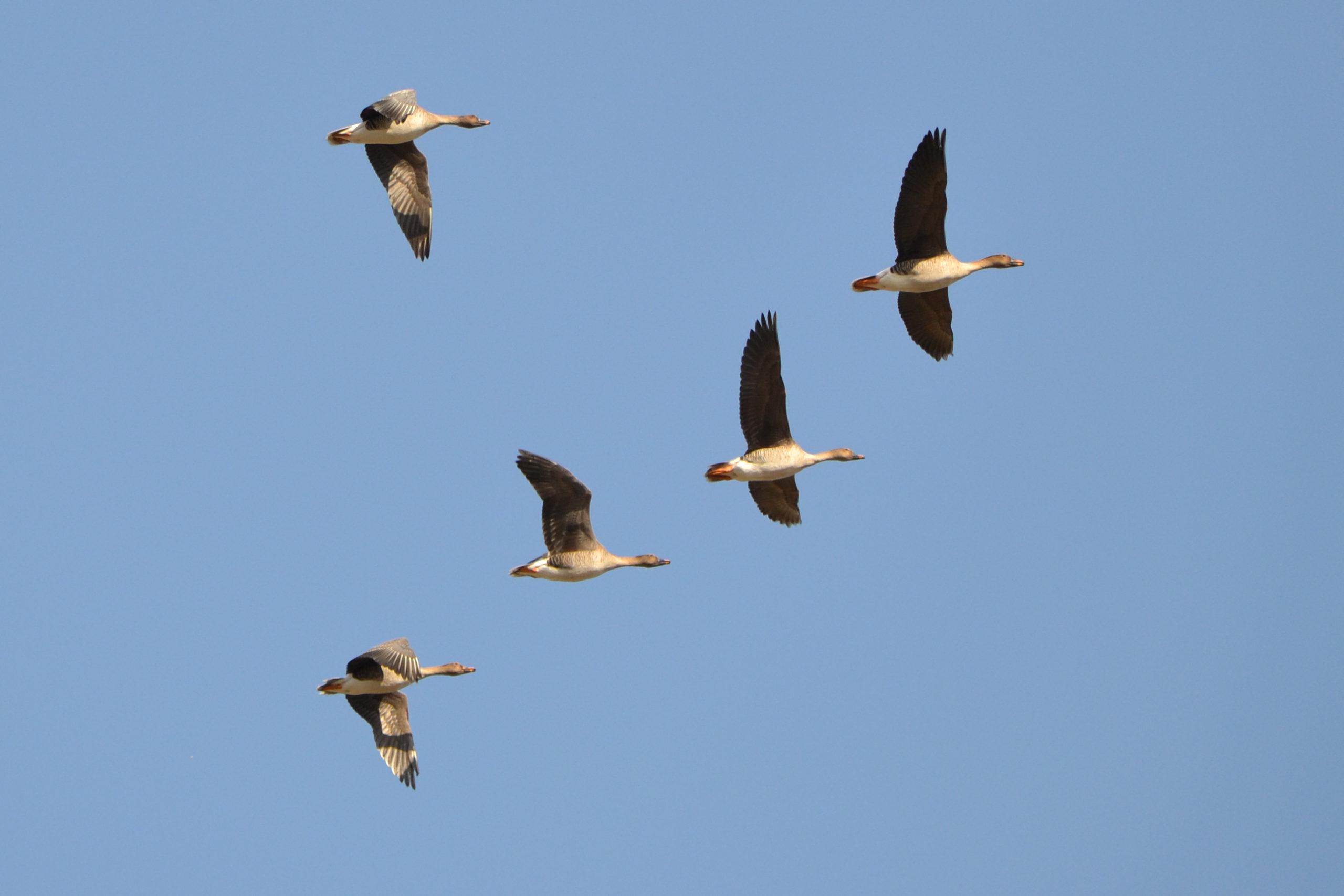 Kevadine Saaremaa on ideaalne koht linnuvaatluseks