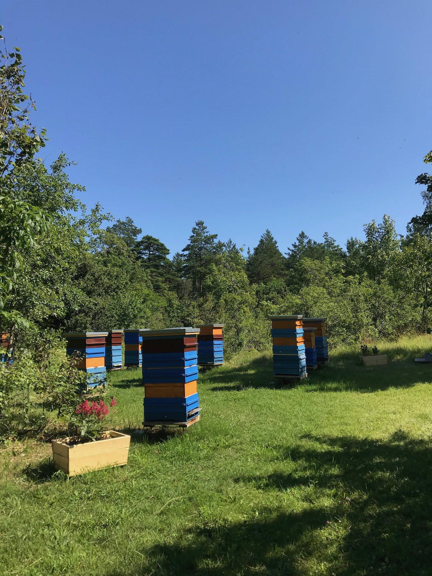 Mesilastarud nunnakloostri hoovis
