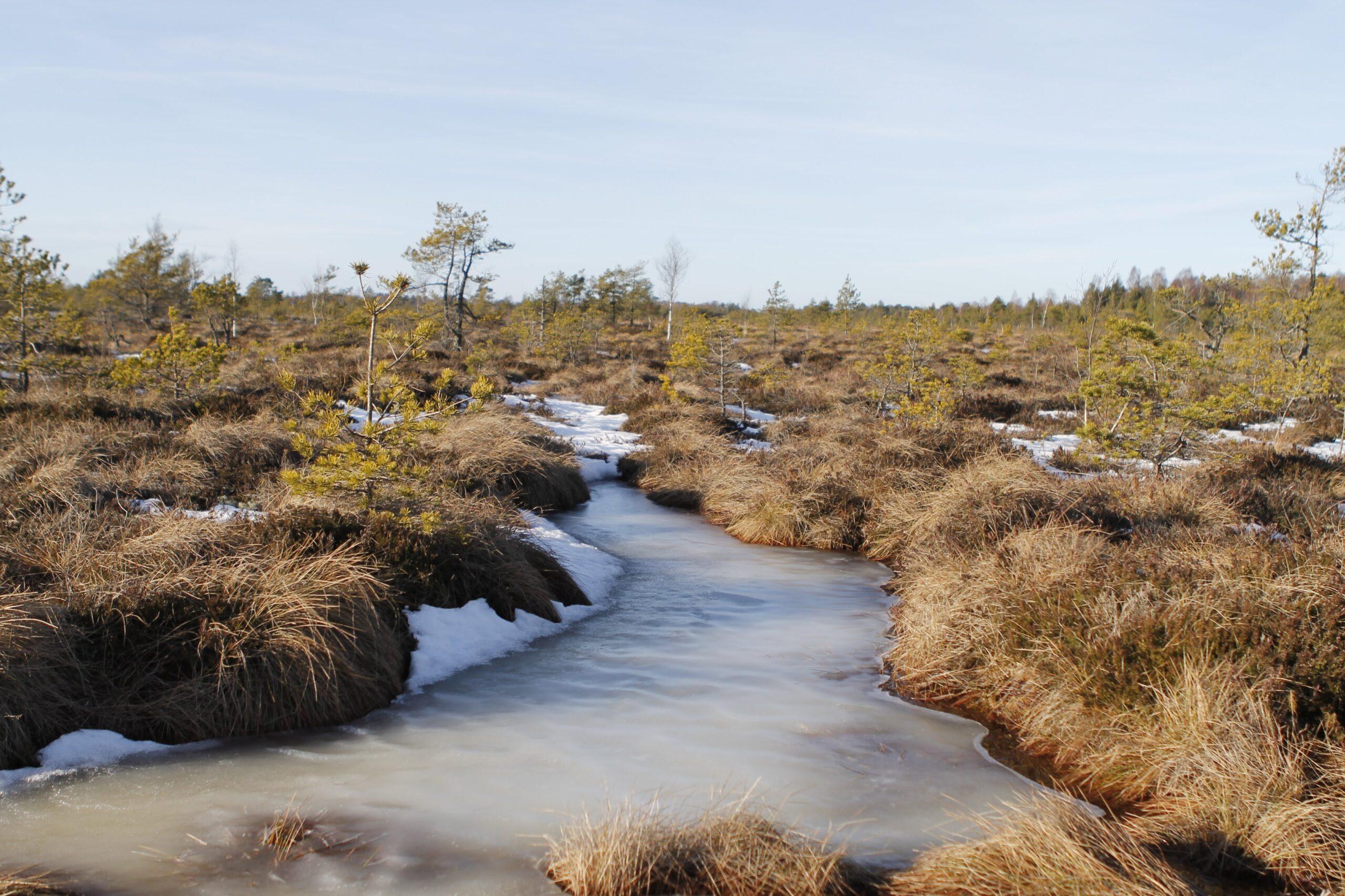 Saaremaa Rabad