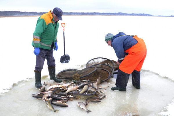Mida talvel Saaremaal teha? Püüa kala!