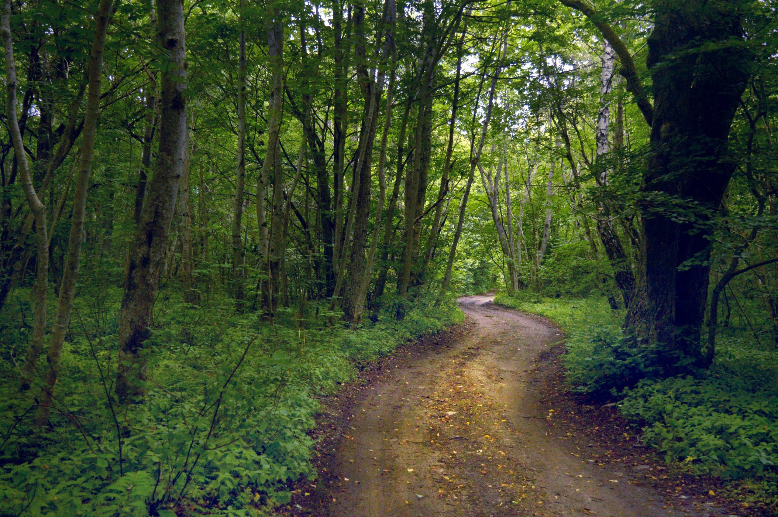 Abruka müstiline mets